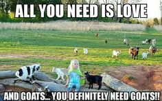 Cute Funny Animals, Funny Animal Pictures, Funny Goat Memes, Farm Animals, Animals And Pets, Farm Humor, Raising Goats, Cute Goats, Goat Farming