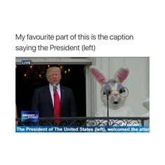 "58.8k Likes, 575 Comments - going private in 2 minutes!! (@masturwate) on Instagram: ""feel like the rabbit being president wouldn't be such a bad thing"""
