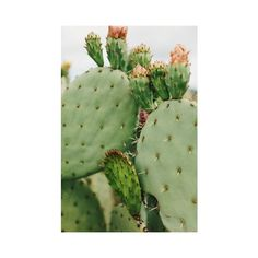 cactus inside/outside ❤ liked on Polyvore featuring pictures, photos, backgrounds, green and pics