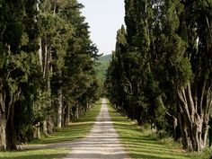 Via Francigena | From Monteriggioni to Siena. Stomennano. The entrance to Stomennano is preceded by a cypress tree-lined drive almost a half kilometer long. | Podere Santa Pia, Casa Vacanze in Maremma, Toscana