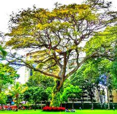 Naturaleza en el Centro de Arte La Estancia. una antigua casona de Caracas, Venezuela