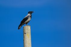 Bird Feeders, Animal Kingdom, Wordpress, Birds, Contemporary, Outdoor Decor, Blog, Macros, Animals
