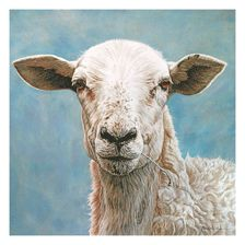 love this sheep - by John Matthew Moore in gouache Sheep Paintings, Animal Paintings, Goat Paintings, Sheep Art, Sheep And Lamb, Funny Drawings, Farm Yard, Watercolor Animals, Pet Portraits