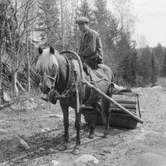 """""""Jatkosodan jälkeen Suomi joutui maksamaan Neuvostoliitolle sotakorvauksia. Osan niistä Suomi kuittasi hevosilla, ja noin 15 000 suomenhevosta päätyi itärajan taakse."""" Horses, Animals, Animales, Animaux, Animal, Animais, Horse"""