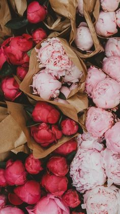 Whether you've just got a new phone or want to update your iphone wallpaper. Check out these 27 very very pretty iPhone wallpaper. Peonies Wallpaper, Wallpaper Flower, My Flower, Fresh Flowers, Beautiful Flowers, Cactus Flower, Exotic Flowers, Flower Beds, Purple Flowers