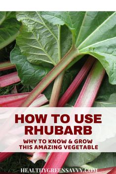 10 wonderful uses for rhubarb, a healthy, low-calorie vegetable used as a fruit. Click to read more or pin to save for later. #rhubarbrecipes #healthytreats #ediblelandscaping #rhubarb #healthyfood