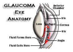 National Glaucoma Awareness Month Logo