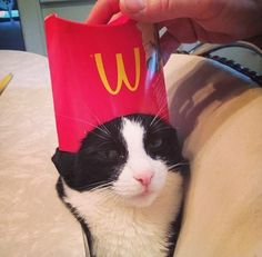 Grand Poohbah of the Order of the Golden Arches