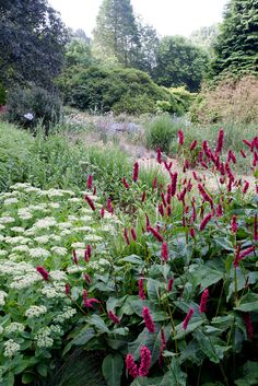 I love Persicaria. Mine looks pretty insignificant. this looks nice. Love Garden, Dream Garden, Garden Art, Garden Plants, Amazing Gardens, Beautiful Gardens, Beautiful Flowers, Outdoor Landscaping, Outdoor Gardens