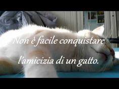 Omaggio al gruppo GATTO:  L'ANIMALE PERFETTO.. :-)  QUANTI GATTARI SIAMO...