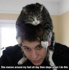 funny+animal+pictures   Few Funny Animal Pictures To Put A Smile On Your Face - Ned Hardy ...