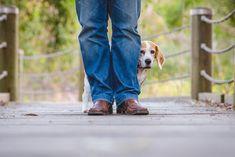 4 cosas a las que los perros tienen mucho miedo - Mis animales
