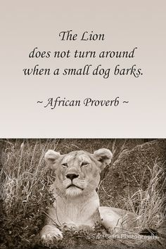 Dogs Paintings Whimsical - Dogs Sketch Step By Step - - - - Dogs Care Nails Wisdom Quotes, True Quotes, Great Quotes, Motivational Quotes, Inspirational Quotes, The Words, African Proverb, Warrior Quotes, Meaningful Quotes