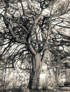 Ritva Kovalainen & Sanni Seppo: Sarjasta Pyhäpuu / From the series Holy trees