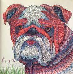 British Bulldog - The Menagerie colouring book