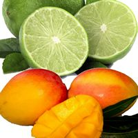 LIME & MANGO Candle Soap Making Fragrance Oil