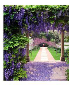 Secret Garden in Margaret River…Paul Bangay. Wisteria and Lavender.