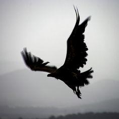 Raven__ CROW, Tipi with Thunderbird http://www.pinterest.com/pin/436356651368957747/