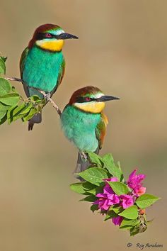 Super Ideas For Little Bird Photography Pictures Kinds Of Birds, All Birds, Little Birds, Love Birds, Most Beautiful Birds, Pretty Birds, Exotic Birds, Colorful Birds, Exotic Flowers