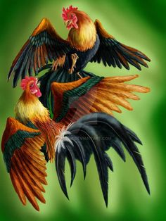Chicken Painting, Chicken Art, Chicken Tattoo, Fresh Chicken, Rooster Painting, Rooster Art, Beautiful Artwork, Beautiful Birds, Arte Do Galo