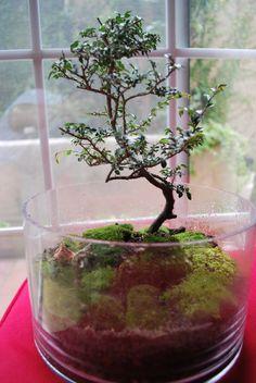 Terrarium & Timmy: turtle moss got a tree