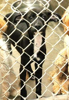 Has rescue. Since OAC won't approve new rescues anymore they need adopted and transport to Dallas or fosters here till transport. Please send us a PM if you can help. They all only have until 7pm tonight 05/13/14 !!! Odessa, Texas