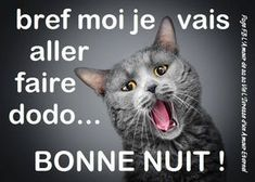 Bref moi je vais aller faire dodo... Bonne nuit ! Plus Good Night Cards, Good Morning Good Night, Chats Image, Happy Weekend Images, Smoke On The Water, Ending Story, Cat Dog, Beautiful Creatures, Animals And Pets