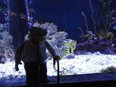 caballito de mar, aquarium