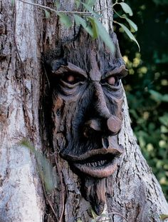 Tree Faces: Friendly Ent Tree Face   Gardener's Supply
