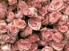 Розовые розы, розовое, розы, цветы 1600х1200