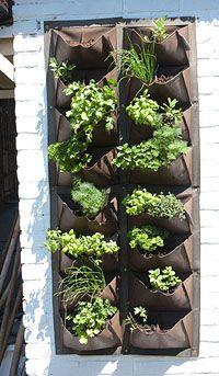 Moestuin op je balkon, herbs hanging from youre balcon.