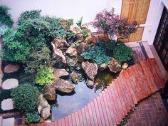 plantas para lagos ornamentais - Google Search
