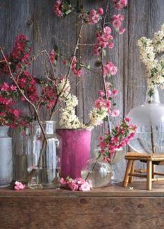 Spring Branching Blooms