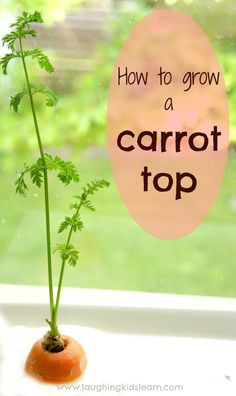 Simple science experiment for kids to learn how to grow a carrot top. Children learn about the basics needed for it's survival and how to care for something Preschool Garden, Preschool Science, Science For Kids, Science Activities, Science Experiments, Primary Science, Garden Kids, Steam Activities, Science Fun