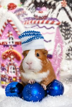 Christmas guinea pig in a hat