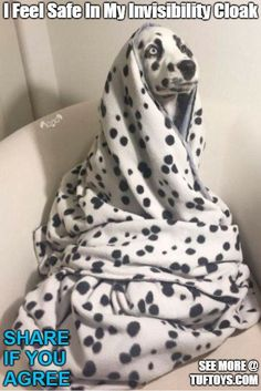 Funny Dog Memes Part 5 - Funny Dog Quotes - Funny picture of Dalmation expertly camouflaged in a blanket believing himself to be wearing an invisibility cloak The post Funny Dog Memes Part 5 appeared first on Gag Dad. memes Funny Dog Memes – Part 5 Funny Animal Jokes, Dog Quotes Funny, Cute Funny Animals, Cute Funny Dogs, Funny Pics Of Dogs, Funny Dog Gif, Funny Puppy Memes, Funy Animals, Corny Jokes