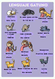 Gatitos..tan bipolares pero adorables (: