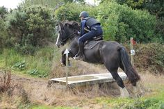 Eastwood with a first time jumper going around the cross country course! Chunky Monkey, Horses For Sale, Cross Country, Jumper, Irish, Animals, Cross Country Running, Irish People, Animaux
