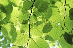 Glowing Leaves - Fototapety - Photowall