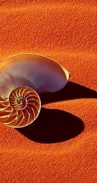 Nautilus on orange-colored sand; posted by Cristina from Tenerife, Canary Islands, Spain. Jaune Orange, Orange Yellow, Burnt Orange, Orange Color, Orange Beach, Orange Art, Orange You Glad, Orange Is The New, Orange Aesthetic