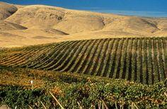 Wine Tour by Yakima, WA