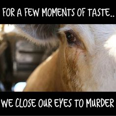 for a few moments of taste ... we close our eyes to murder; please open your eyes live #vegan