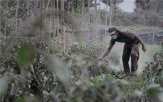 印尼火山灰覆盖下的岛民生活剪影 当地时间2014年10月14日,印尼苏门答腊岛,岛上的居民清理火山爆发后厚重的火山灰。目前,锡纳朋火山仍然处于最高警戒状态,不断有余震和火山喷发的碎屑,严重影响岛上居民的生活。。。
