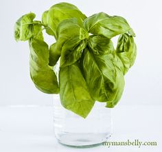 What to do with basil when you have too much of it - good to know