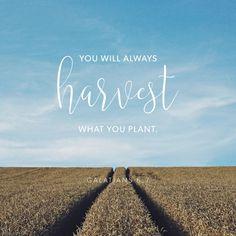 ~Galatians 6:7