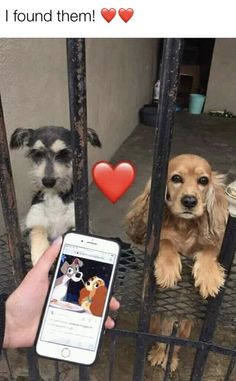 Things that make you go AWW! Like puppies, bunnies, babies, and so on. A place for really cute pictures and videos! Funny Animal Jokes, Cute Funny Animals, Funny Animal Pictures, Animal Memes, Funny Cute, Funny Dogs, Cute Pictures, Cute Dogs And Puppies, Doggies