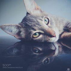 Cool cat by RODOLPHOTOS #animals #animal #pet #pets #animales #animallovers #photooftheday #amazing #picoftheday