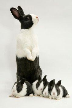 Bunnies | Classy Woman - srta-pepis: ☆ ioLA (vía Pinterest)