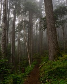 Misty Trail - Misty trail in the Olympic National Forest, Washington State Misty Forest, Forest Fairy, Magical Forest, Dark Forest, Twilight Movie, Twilight Saga, Forks Twilight, Picture Wall, Photo Wall