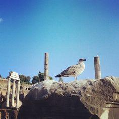 #TemplodeCastoryPolux #Roma